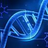 Proteinler Nasıl Üretilir? (DNA'dan Proteinlere)