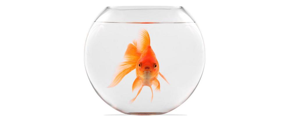 Balıklar Su İçer mi?
