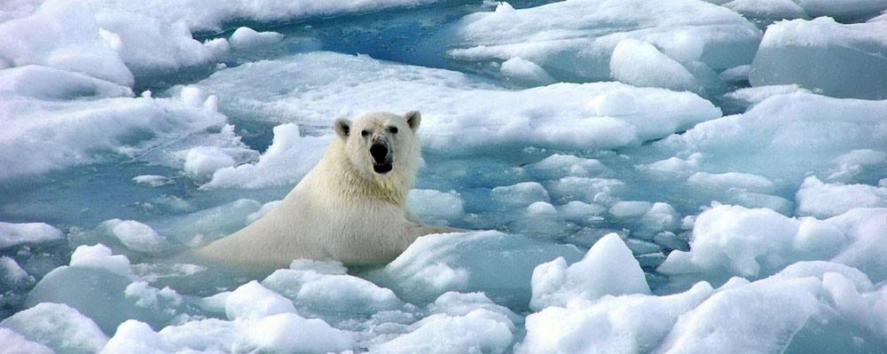 Kutupta Yaşayan Hayvanlar Soğuğa Nasıl Dayanır?